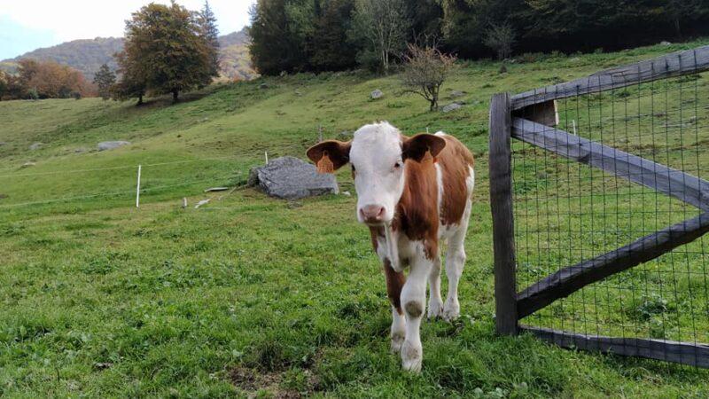 Alpe di Lemna_Agriturismo e faggeti